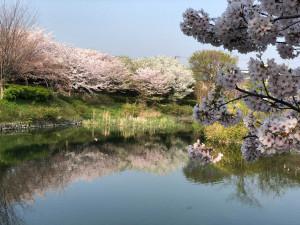04_対岸の桜